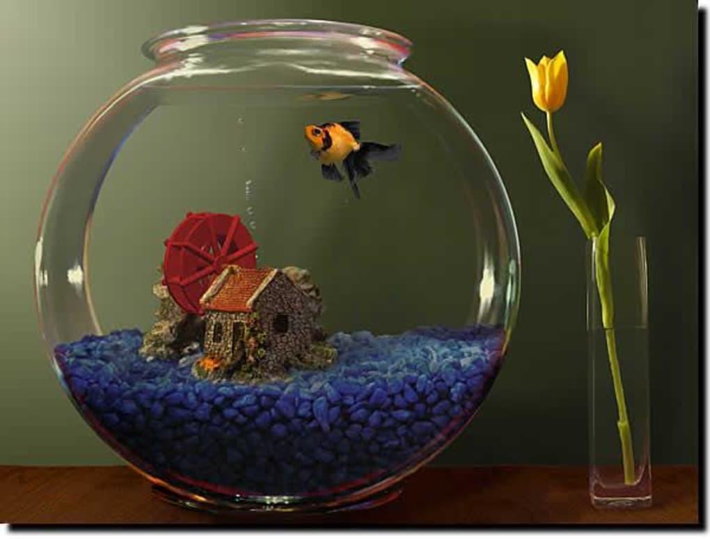 Goldfish Aquarium Download