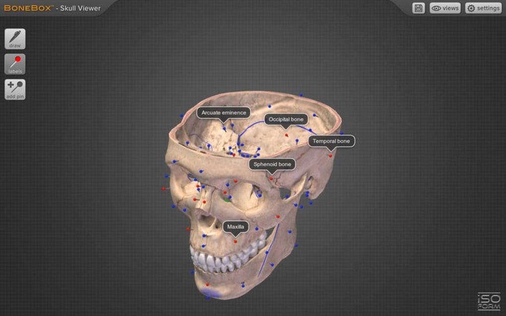 BoneBox - Skull Viewer for Mac - Download