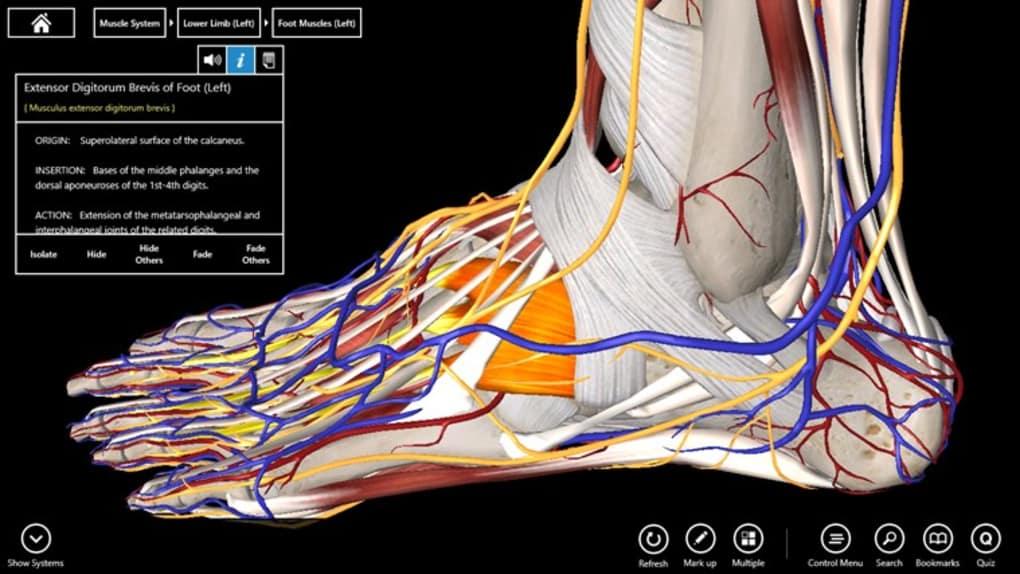 Essential Anatomy 3 - Download