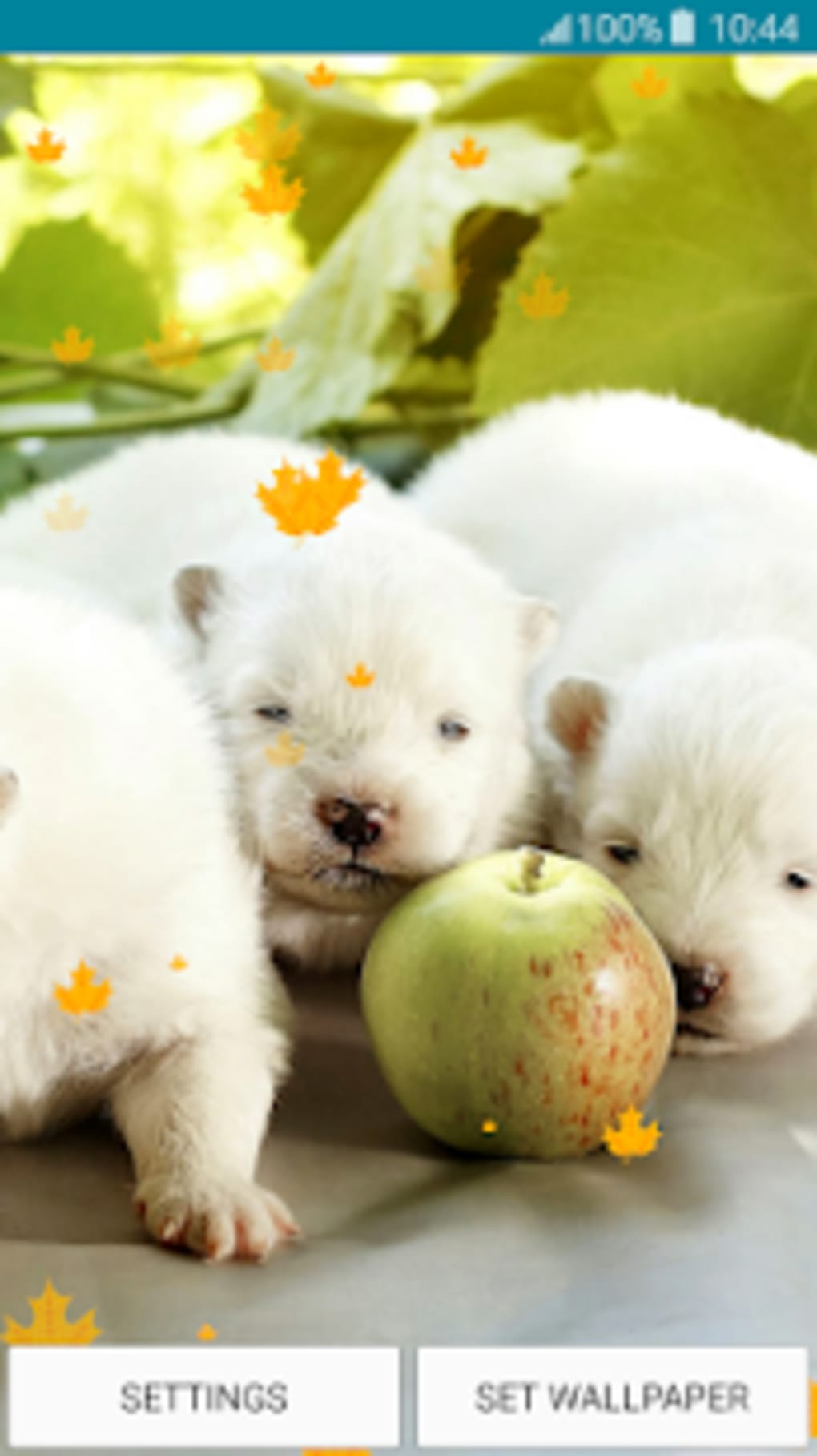 Live Wallpapers Puppies APK for Android