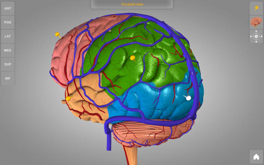 Brain - 3D Atlas of Anatomy for Mac - Download