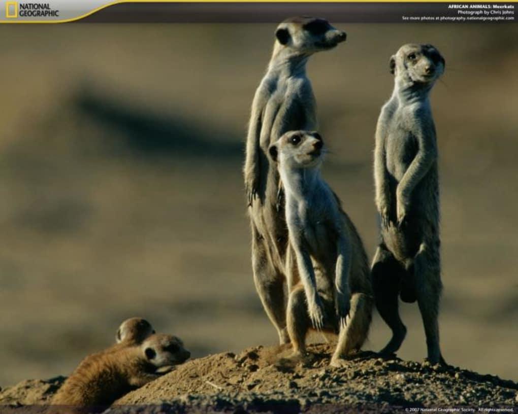 bildschirmschoner afrika