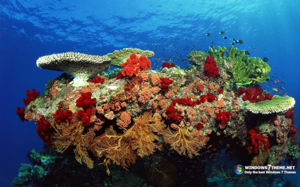 coral reef t233l233charger