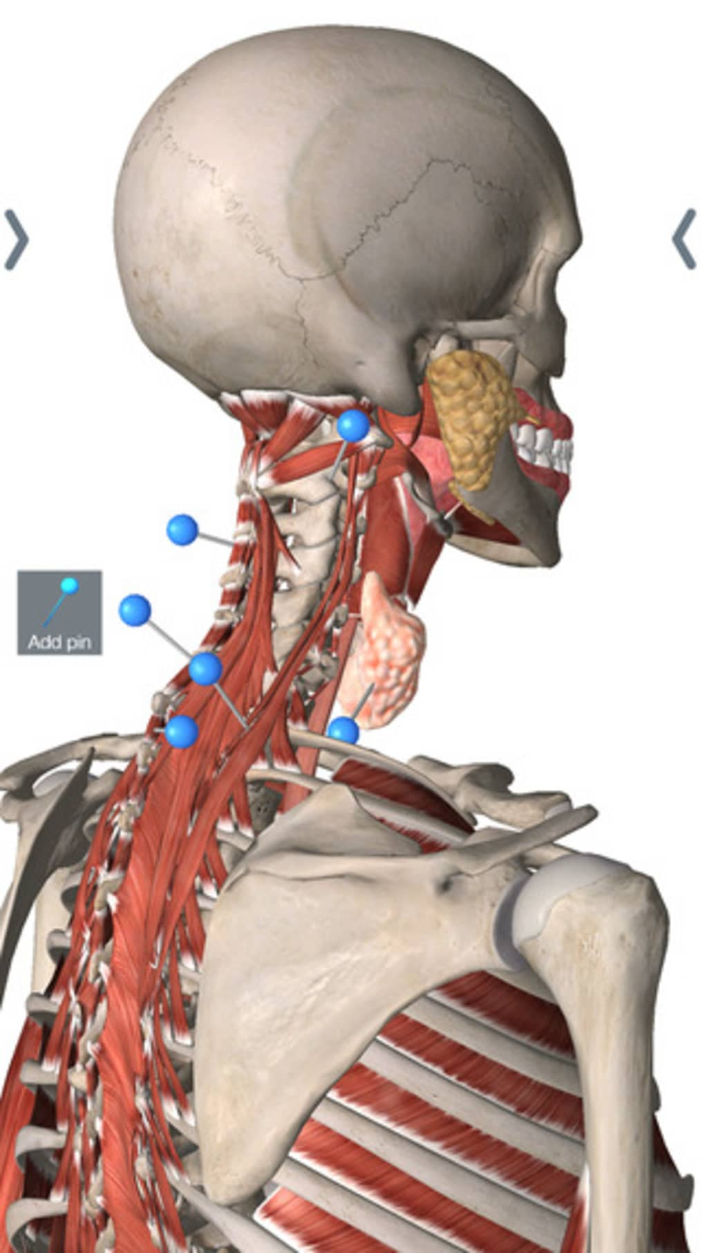 Essential Anatomy For Iphone Download