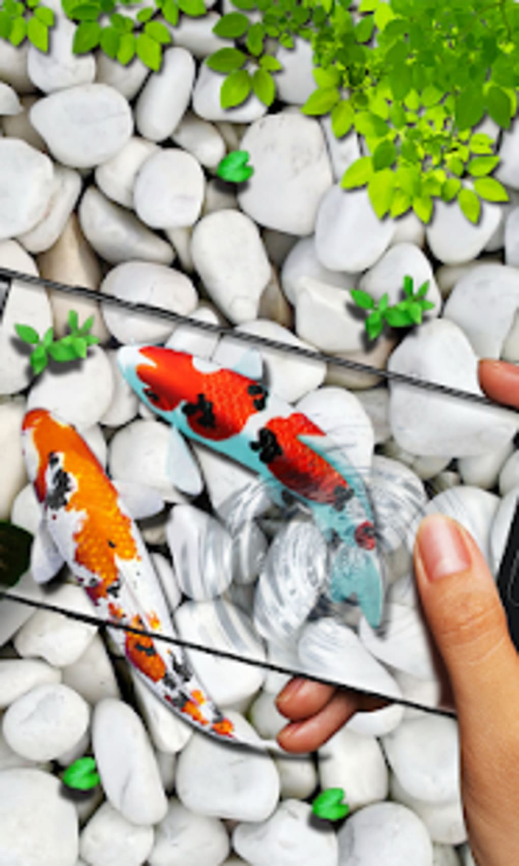 Fish Live Wallpaper 2019 3d Aquarium Koi Pond For Android