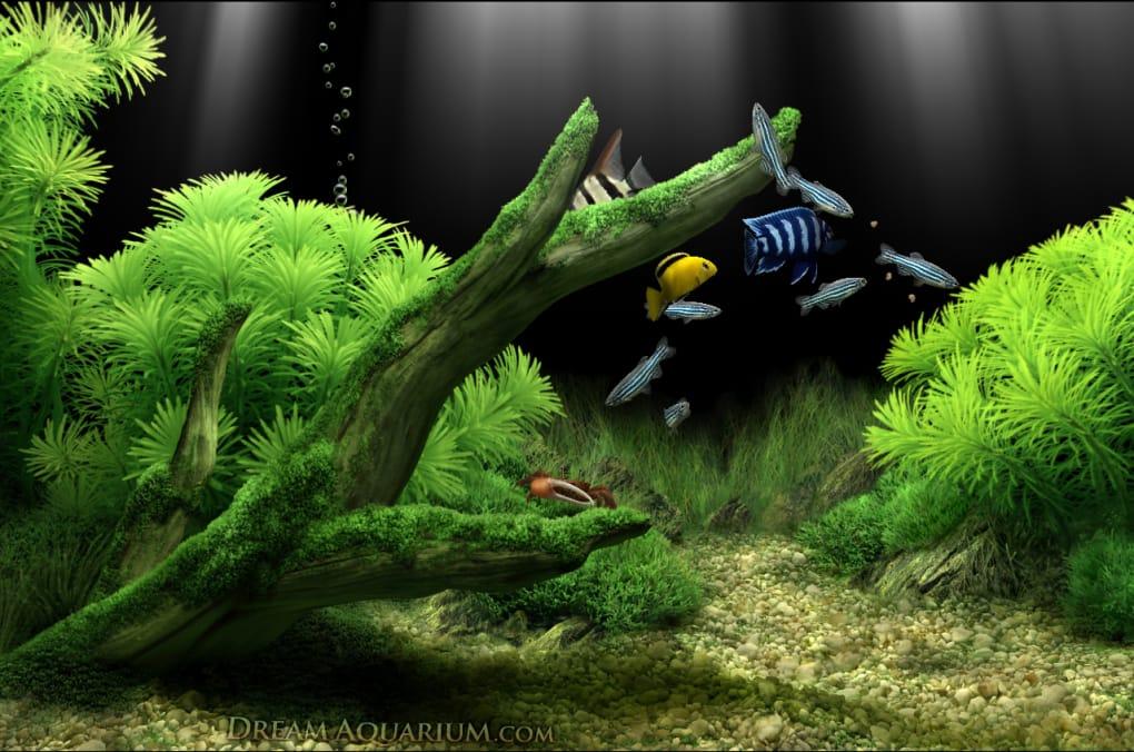 dream aquarium screensaver 破解 版