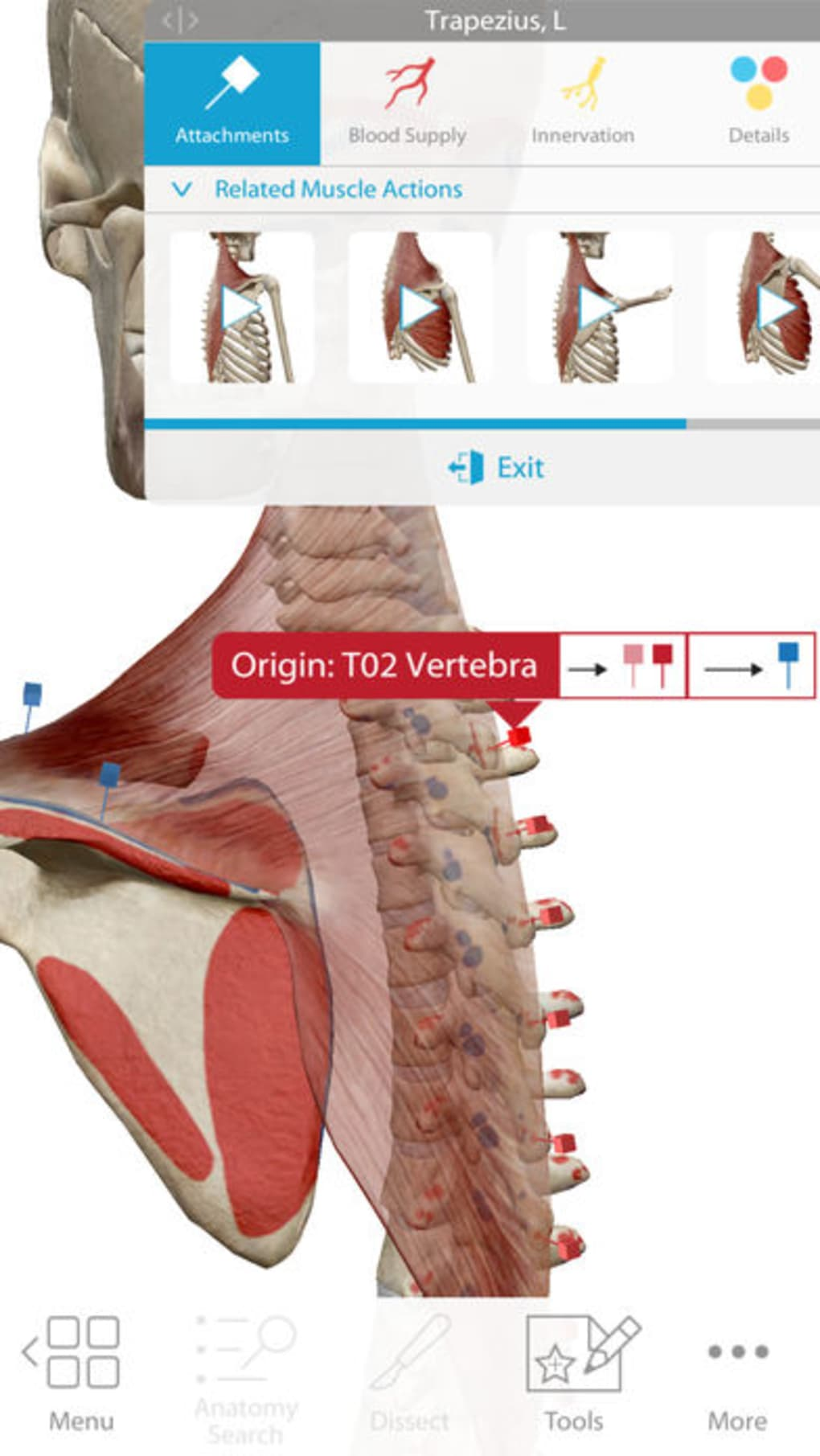 Perfecto Anatomía Ortopédica Rederos Embellecimiento - Anatomía de ...