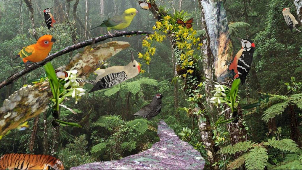Tropical Forest Download