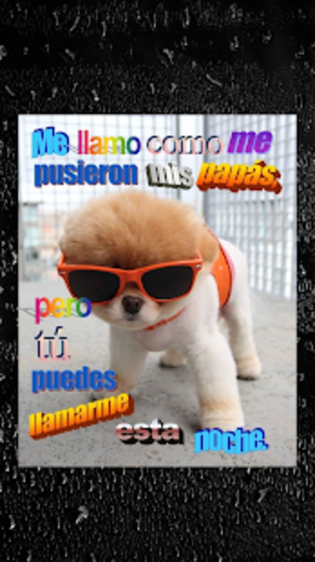 Descargar Stickers De Perros Con Frases Para Whatsapp Gratis