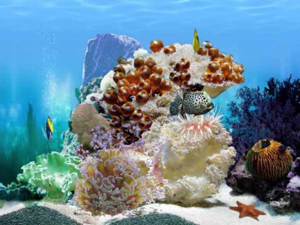 3d aquarium screensaver for windows xp free download