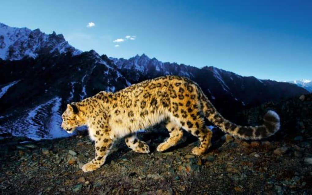 Mac Os X Snow Leopard Wallpapers Mac Descargar