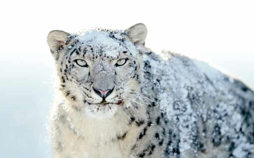 Mac Leopard Download Free