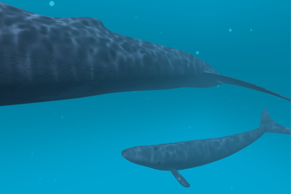 Blue whale VR for Android - Download