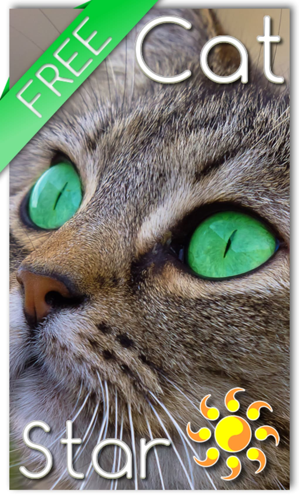 Cat Live Wallpaper For Android Download