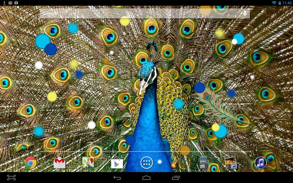 Birds Peacock LWP Free