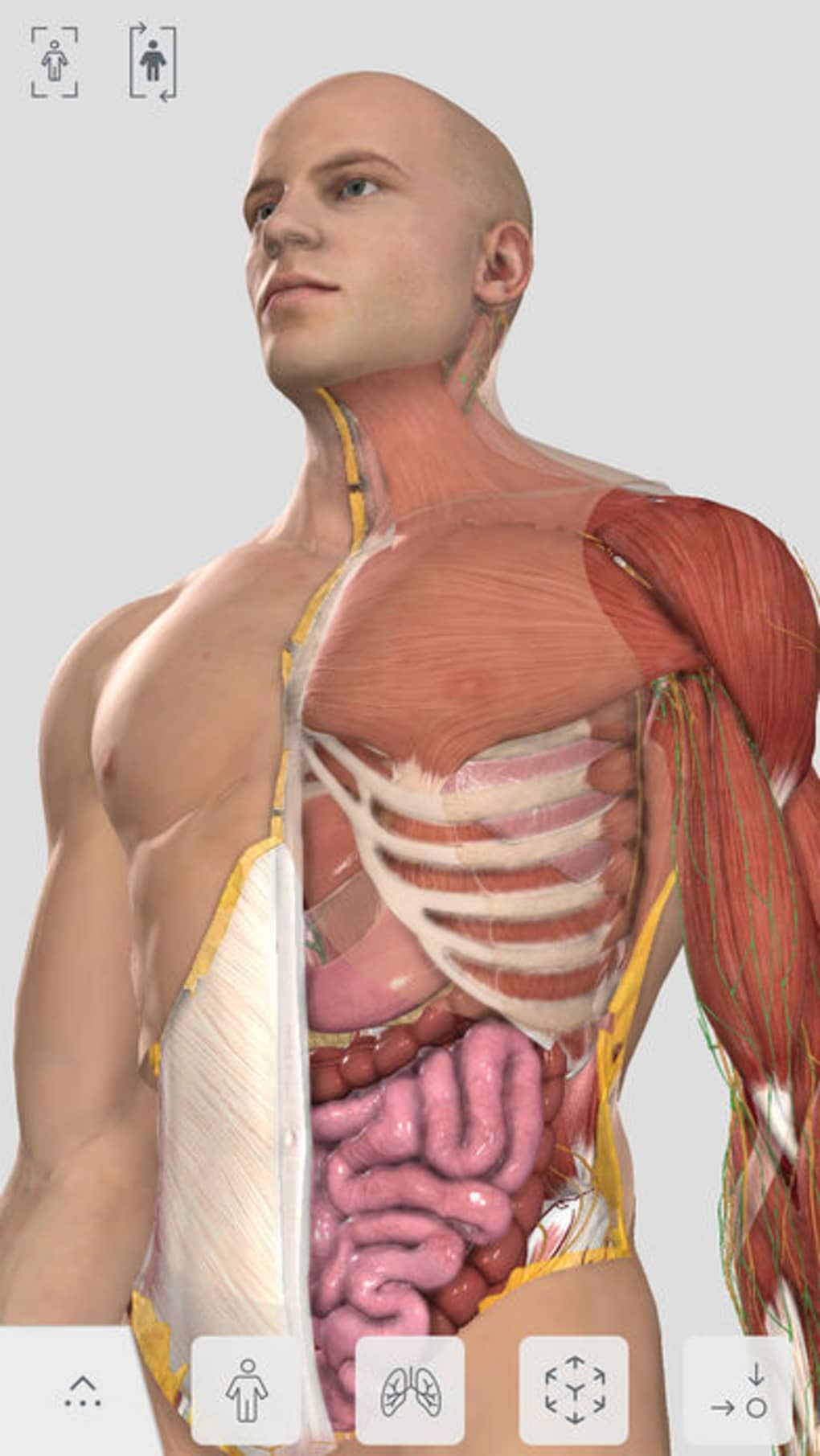 Complete Anatomy for iPhone (iPhone) - Download