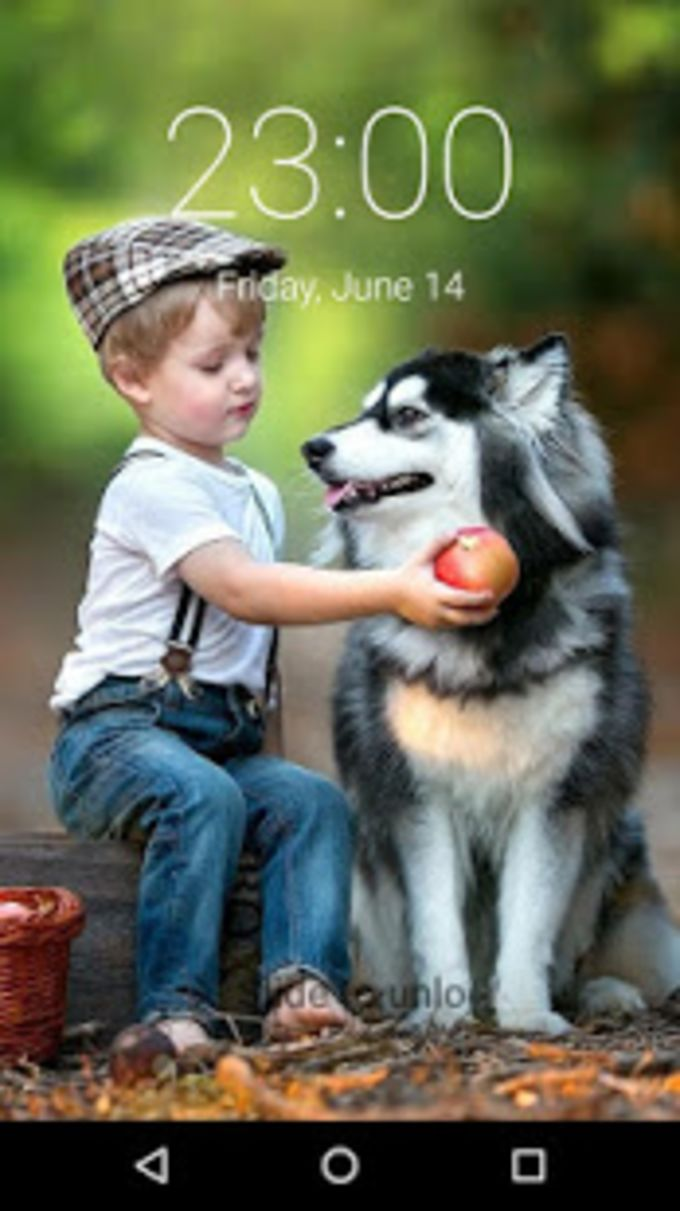 Husky Puppy HD Free Lockscreen PIN PATTERN 2019