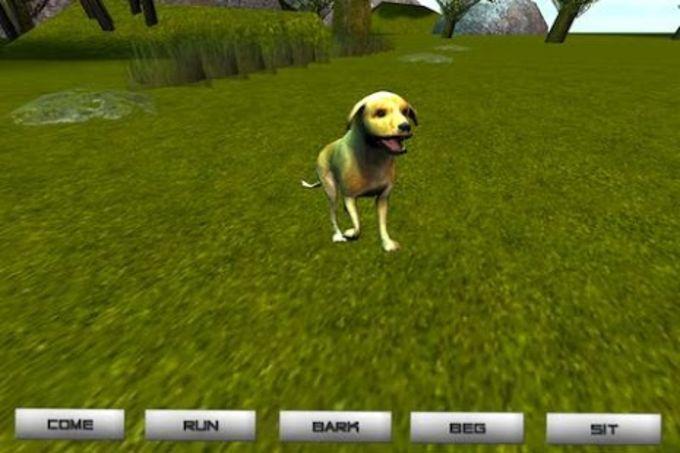 Dog - Pet Dog