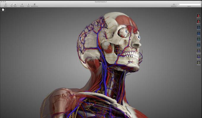 Essential Anatomy