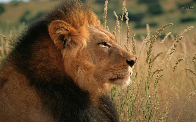Tema Safari