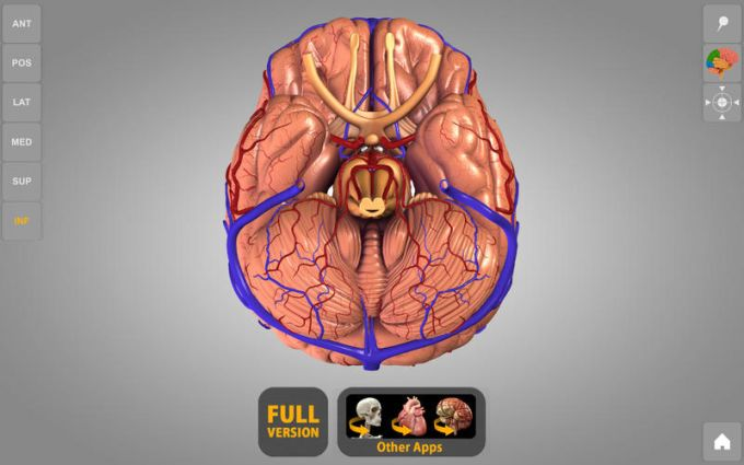 Brain 3d Atlas Of Anatomy Lite For Mac Download