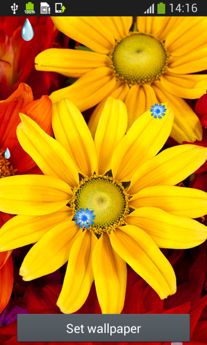 Flowers Live Wallpapers