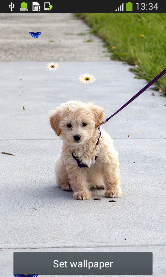 Cute Puppy Live Wallpapers