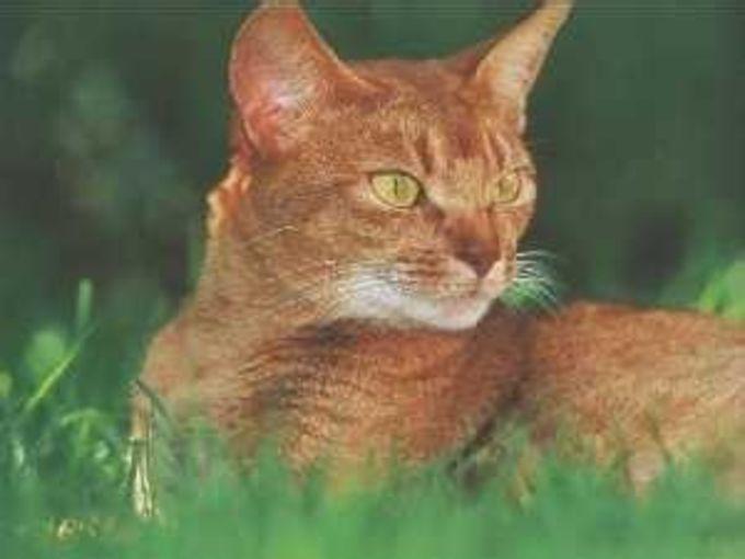 Feline ScreenSaver