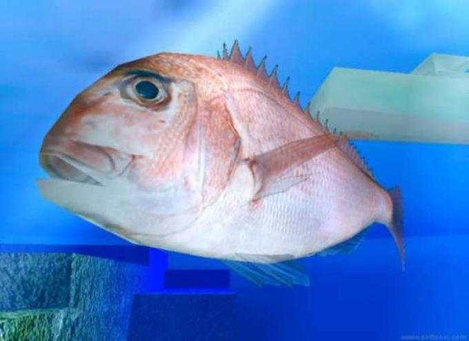 C3Engine Fish Saver