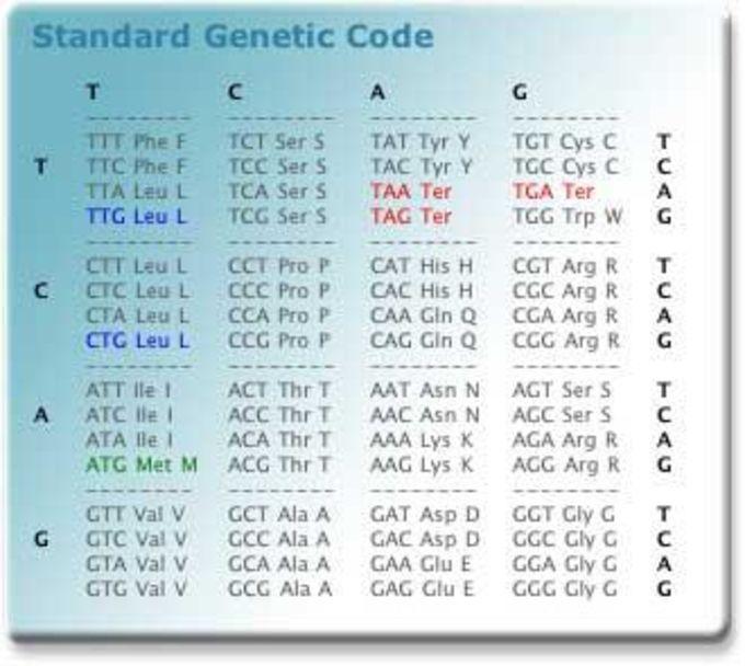 Genetic Code Widget
