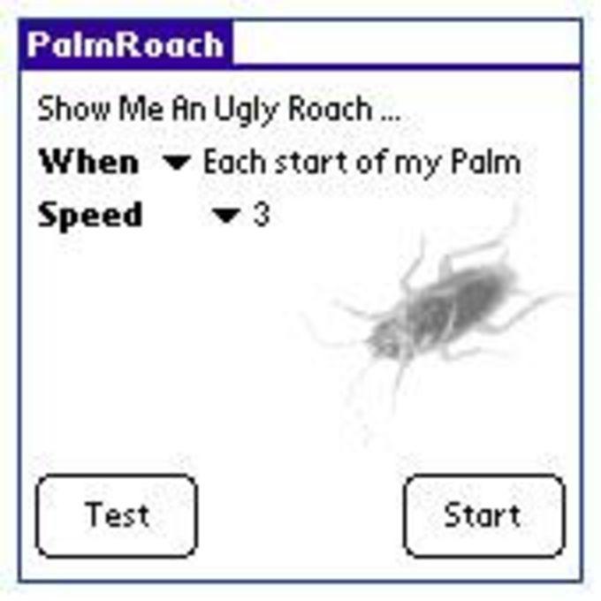 PalmRoach