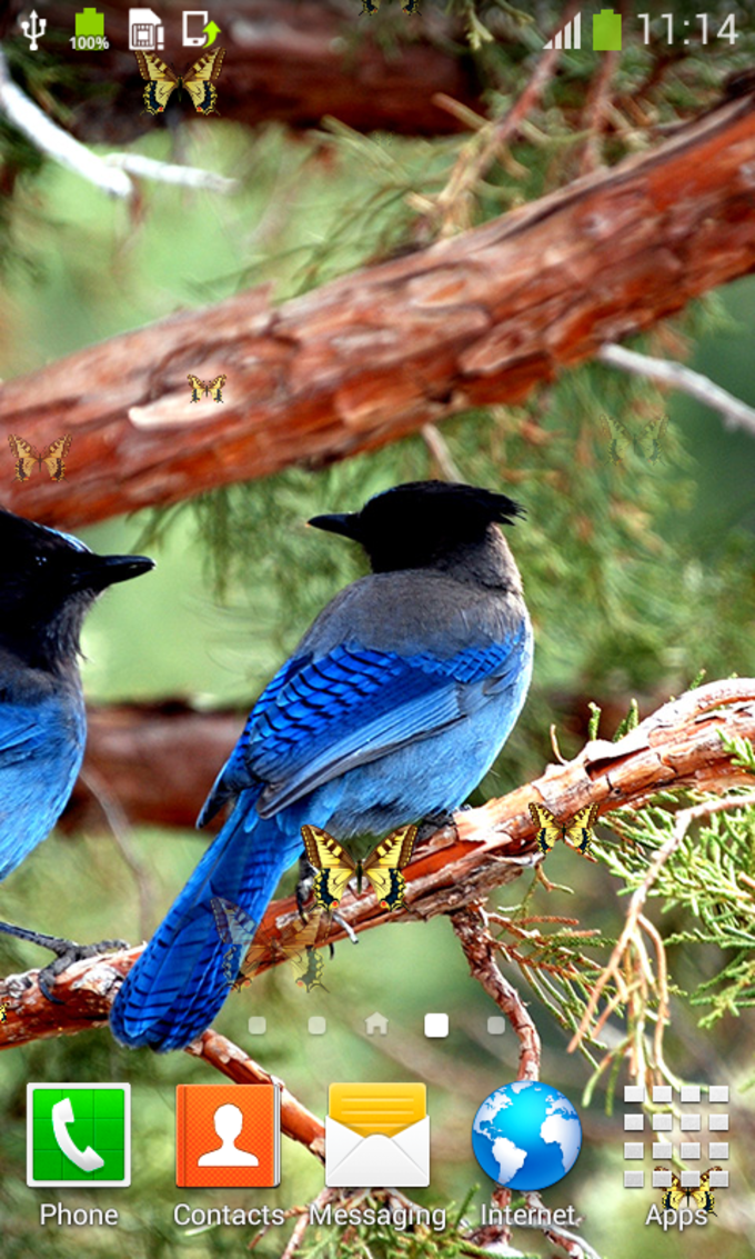 Forest Birds Live Wallpapers