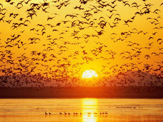 Best Nature HD Wallpaper Pack