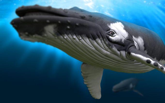 Remix 3D Ocean Life