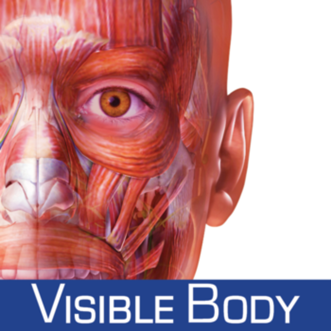 Muscle Premium 3D Visual Guide for Bones Joints and Muscles