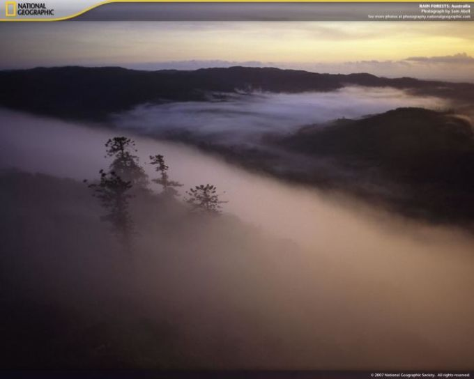 National Geographic Rain Forests Screensaver