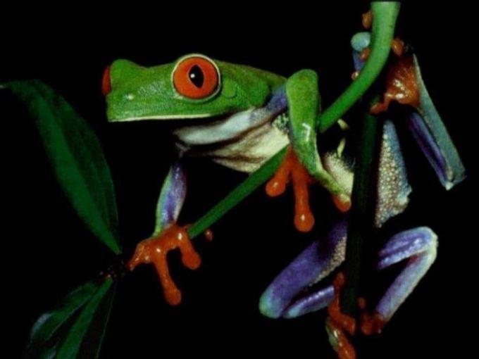 Frog Screensaver