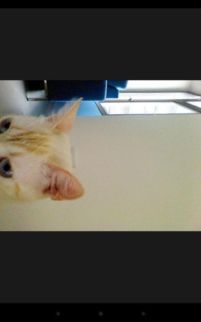 Snapcat - Photo app for cats