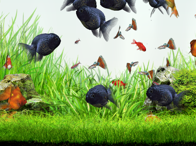 Gold fish pack download for Feed and grow fish free no download