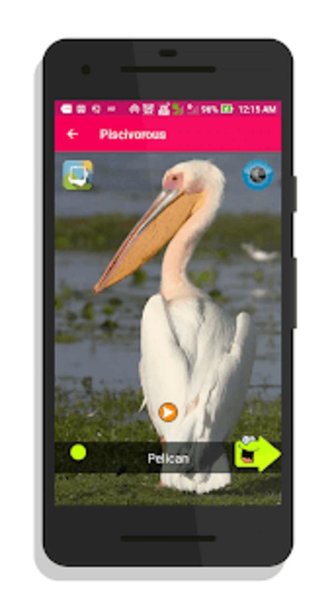 100 Bird sounds : Ringtones Wallpapers