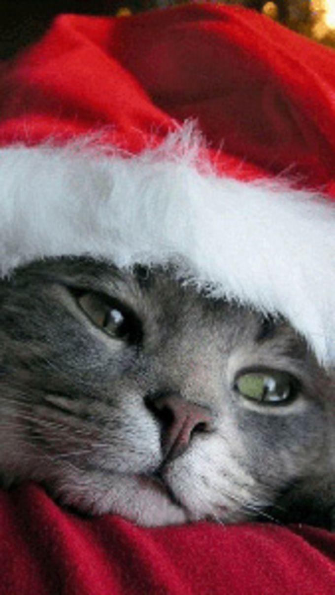 Christmas Cute Cat