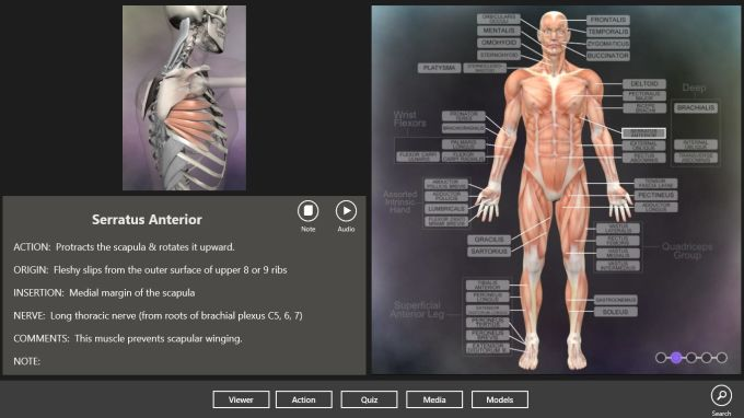 Muscle and Bone Anatomy 3D