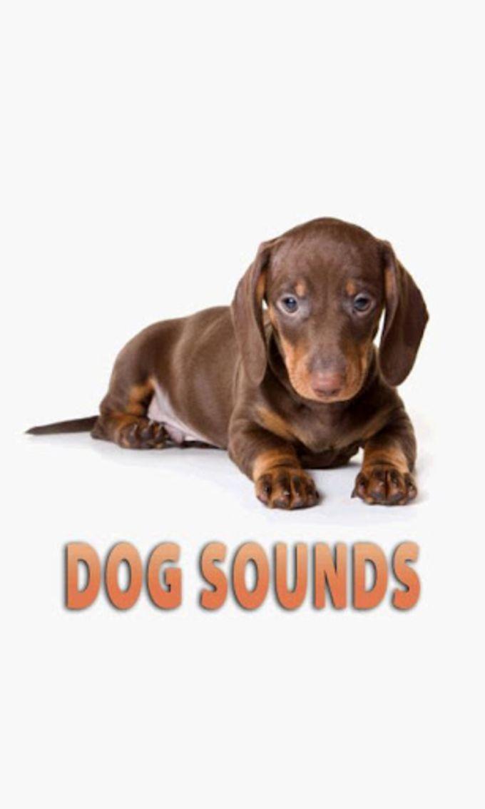 Dog Souds