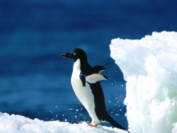Polar Wildlife Free Screensaver
