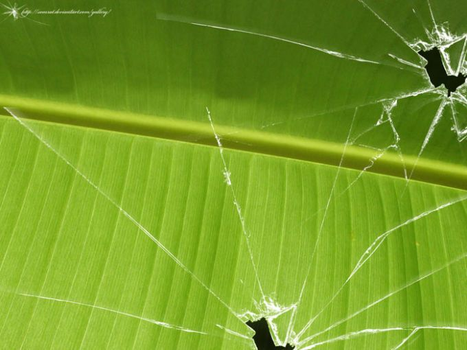Broken Vista Banana Leaf Wallpaper