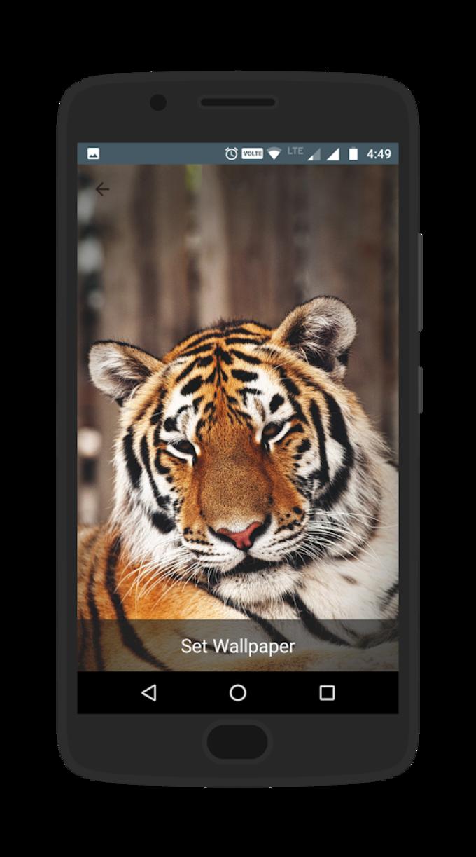 Wally - The Wallpaper App