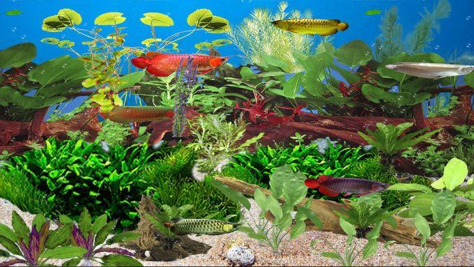 Arowana Deluxe Aquarium