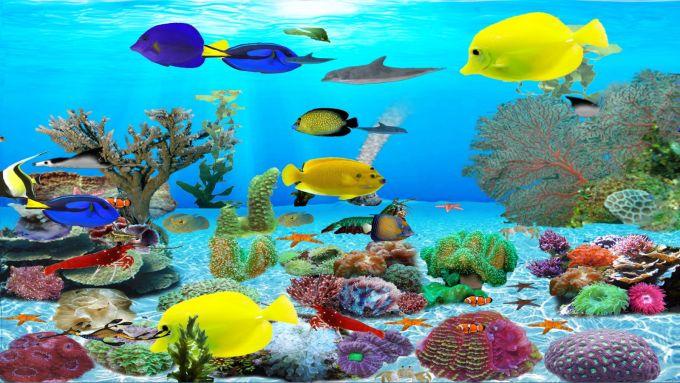 Dolphins Aquarium