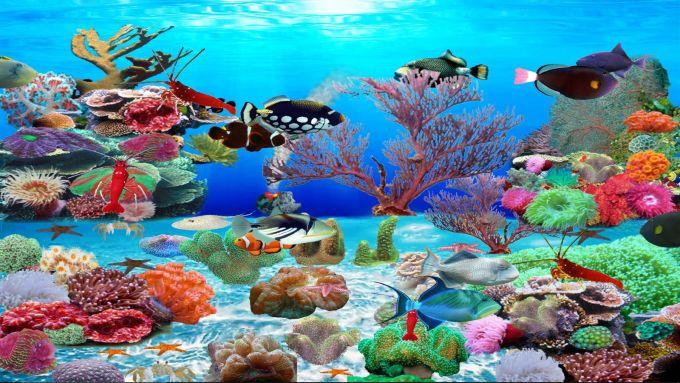 Trigger Fish Aquarium