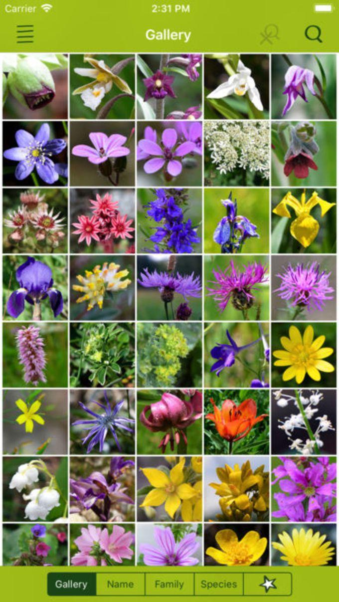 Wildflower Finder Switzerland